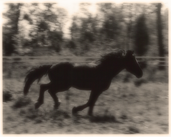 sepia gallop by lupuscrystalus