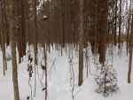 Snow Prints in the Forest by 4TheLoveOfNature