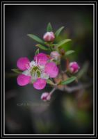 pink flowers 2 by DesignKReations