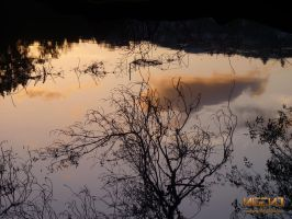Trees In The Water by Nigeno