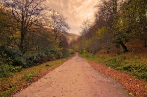 Path to autumn. by MarioGuti