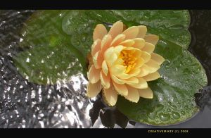 Waterlilly Light by creativemikey