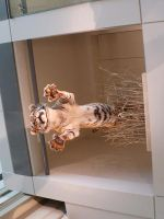 Smithsonian Tiger by RyuSuikoden