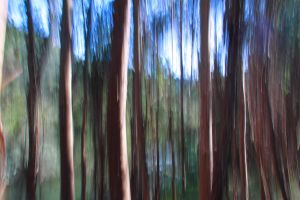 Panning trees by skypho