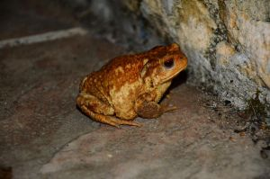 Toad on the tiles by MikeyHramiak