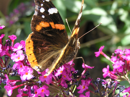 Butterfly 22-07-2015 -8 by 69raywwf
