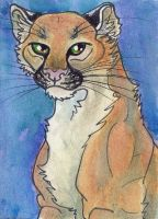 Cougar Aceo by Eviecats