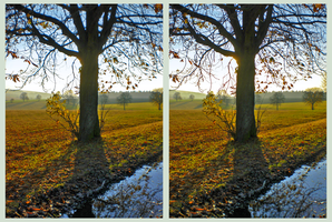 Autumn of November 3D ::: HDR CrossEye Stereoscopy by zour