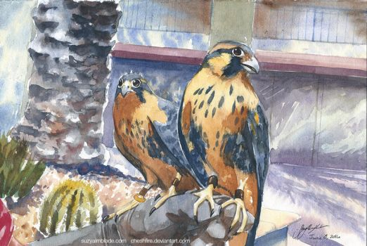 Two Baby Falcons by CheshFire