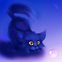 Kitten by amedved