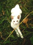 Tumi-tumi, my cat by plainordinary1
