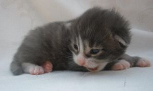 Aphrodite's kits15 days old 5 by badsworth1