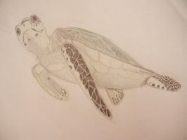 Sea Turtle by Zafer-Aistra