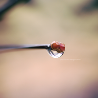 One Last Drop... by onixa