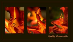 Ardent lilies by grandma-S