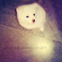 Furball... by addy-ack
