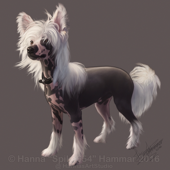 Sketchy Pet Portrait 15 by HannasArtStudio