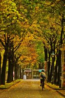 autumn in vienna 1 by tolgagonulluleroglu