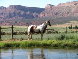 Horses 286 .:Stock:. by WesternStock