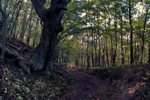 Forest by GeRgOo