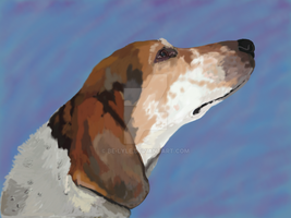Blue Tick Coon Hound Commission by Be-Lyle
