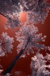 IR Red Sky by badchess