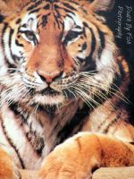 Animal 2013 by DBFPhotography