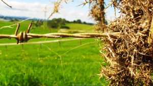 Barbed Wire by Madi-Gascarr