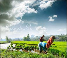 Farmer of Garut by randyrakhmadany