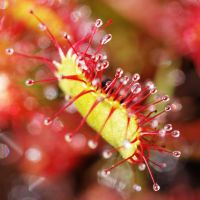 Plante Carnivore by hubert61