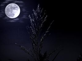 Nature.. .. .., by stock1-2-3