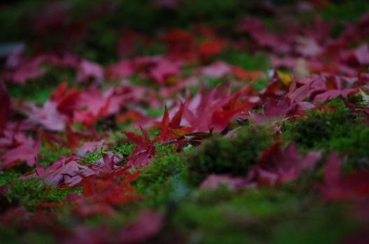 Red Leaves on Moss by klopez3