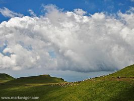 Cloud over cattle by markovigor