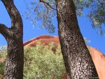 Australia - Uluru behind trees by Ludo38