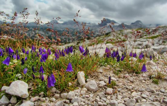 Flowers in the Alps by PoisonAgency