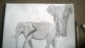 elephants by ccunniffe