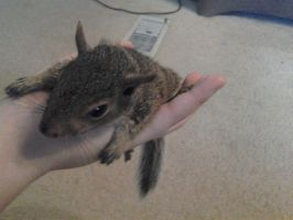Whole Squirrel in My Hand by Daughter-Of-Wolves
