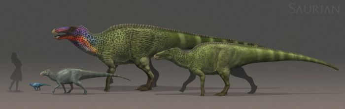 Saurian Anatosaurus ontogeny by ChrisMasna