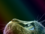 Cat profile (Partial Romantic+Rainbow effects) by Usagichan-odango