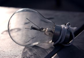 Bulb in the morning light by 1AND-ONLY-RC