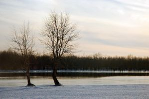 two trees by LucieG-Stock