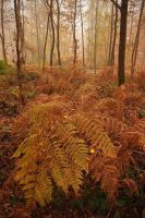 Mist and ferns 2 by yuushi01