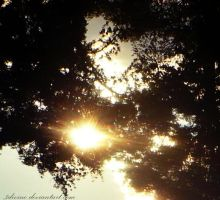 I hearted trees by 3divine