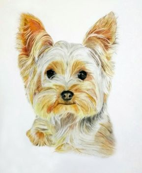 Dog portrait by ni5hitha
