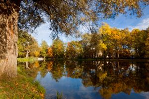 Gold of autumn in Pushkin by khmaria