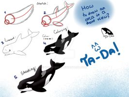 How to draw an orca in a front view? - tutorial by Camy-Orca