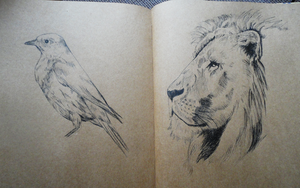 Bluebird and Lion Sketches by Lucky101212