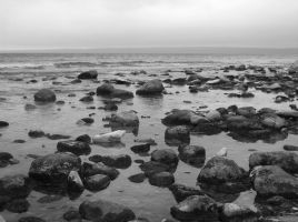 Beach Stones - bw by Silvre