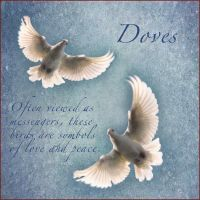 White Doves by muffet1