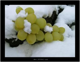 winter grapes by ad-shor
